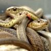 सांप के बारे में 22 मजेदार तथ्य । Snakes In Hindi