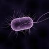 बैक्टीरिया यानि जीवाणु के बारे में 28 रोचक तथ्य । Bacteria In Hindi