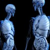 Amazing facts in hindi about Human Body । मानव शरीर के बारे में 24 रोचक तथ्य । भाग 1