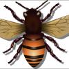मधुमक्खी के बारे में 24 रोचक तथ्य । Honey Bee, Madhumakhi in Hindi