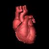 दिल (हृदय) के बारे में 32 रोचक तथ्य । Heart In Hindi