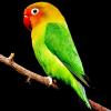 तोते के बारे में 15 रोचक तथ्य । Parrot In Hindi