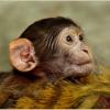 Monkey In Hindi । बंदर के बारे में 21 रोचक तथ्य
