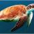 कछुओं के बारे में 21 रोचक तथ्य । Tortoise In Hindi