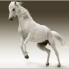 घोड़ो के बारे में 25 रोचक तथ्य । Horse In Hindi