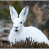 Rabbit in Hindi । खरगोश के बारे में 31 रोचक तथ्य