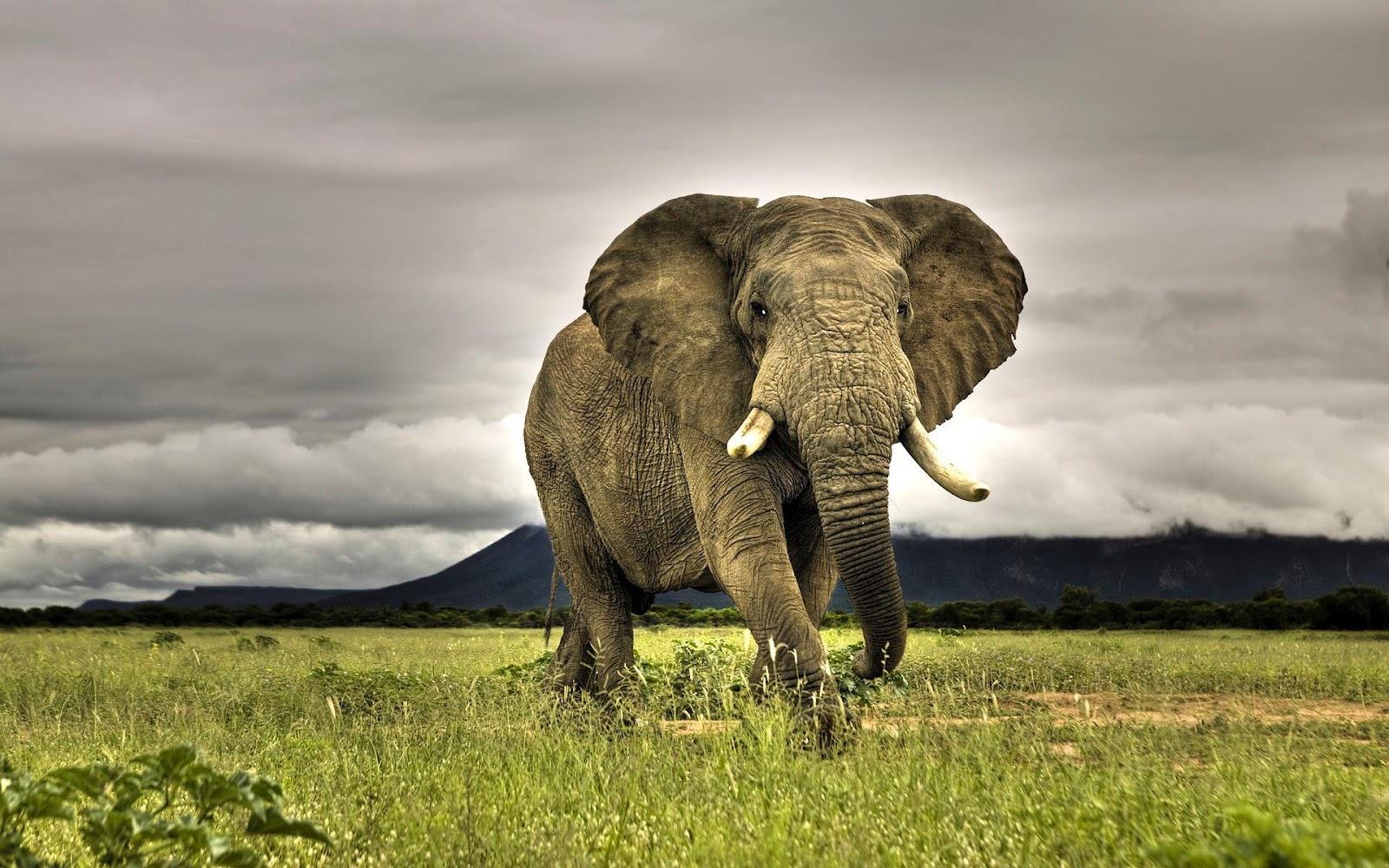 हाथी के बारे में 25+ रोचक तथ्य