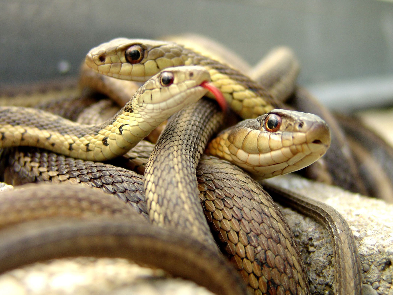 snakes facts in hindi