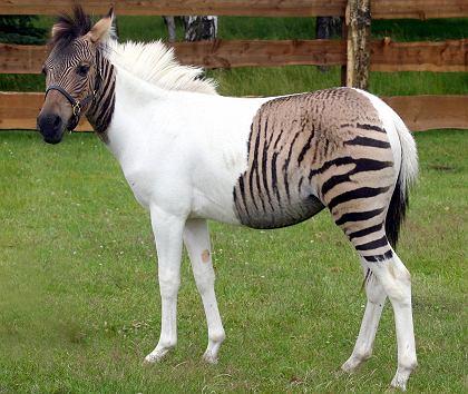 horses in hindi