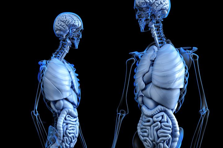 facts about human body in hindi