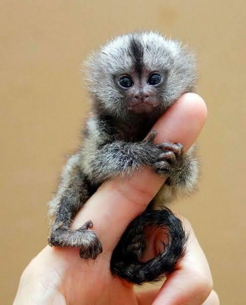 बंदरो के बारे में 21 रोचक तथ्य
