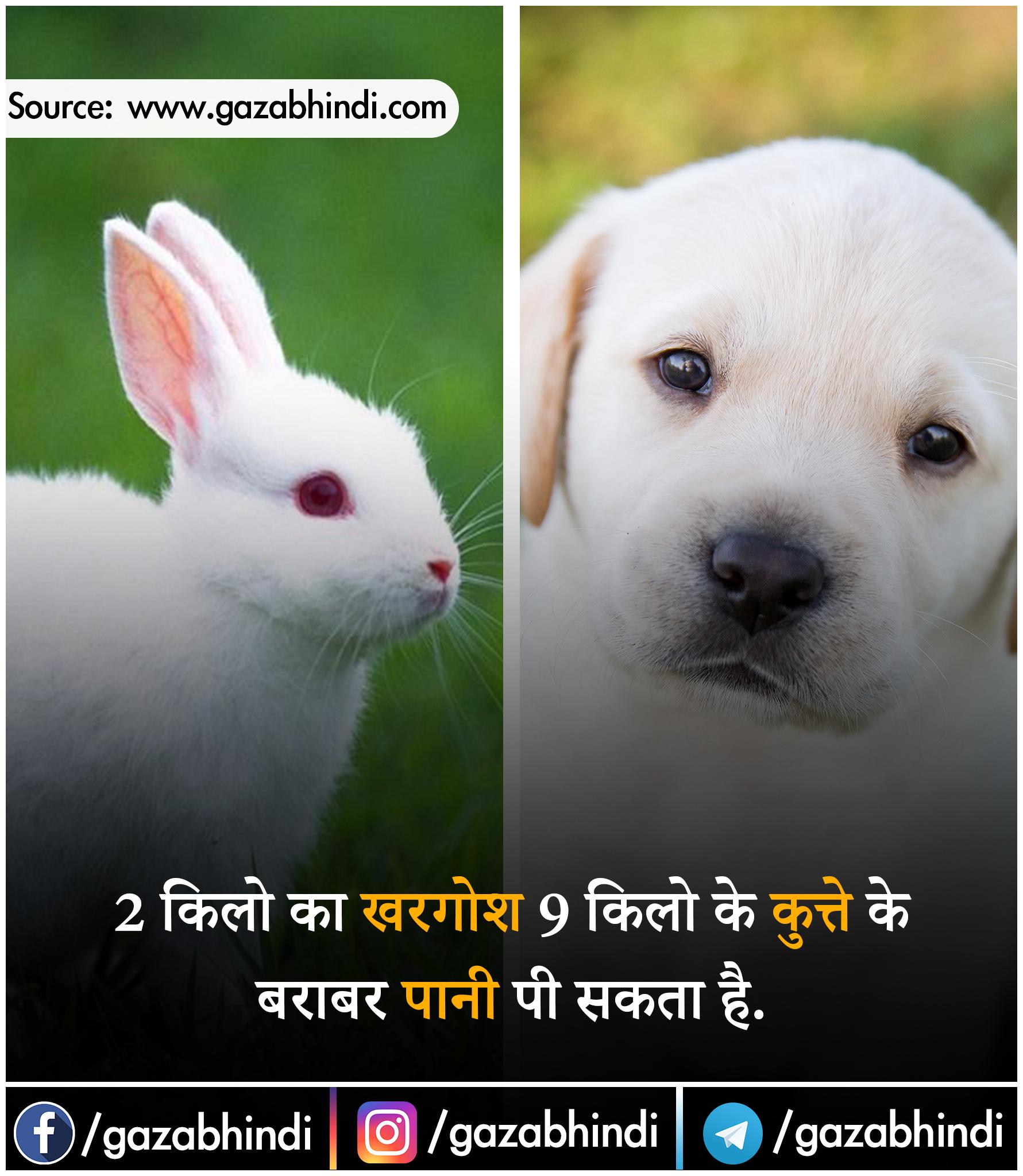 खरगोश के बारे में रोचक तथ्य